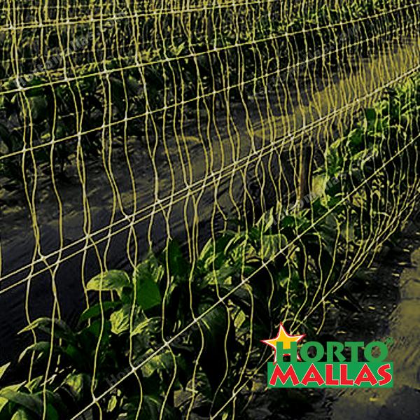 Gracias al espacio que genera la malla espaldera todo el cultivo recibe los rayos solares de manera uniforme.