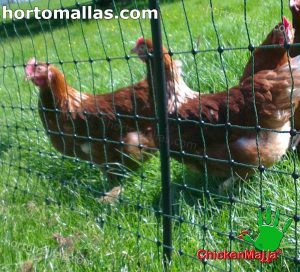 chickenmalla net installed protecting chickens