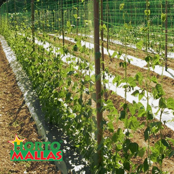 Gracias a la separación de los cuadros de HORTOMALLAS® tu cultivo recibe una exposición solar mas uniforme.