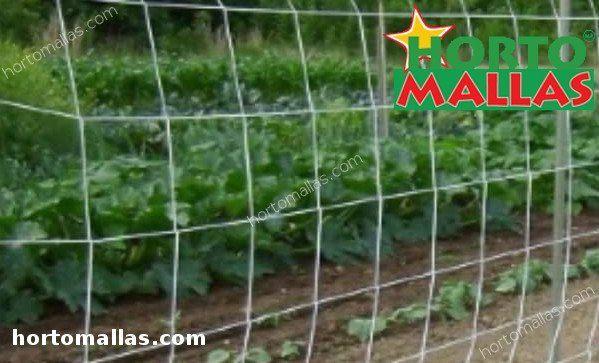 rete di supporto a muro installata per fornire supporto per piante verticali