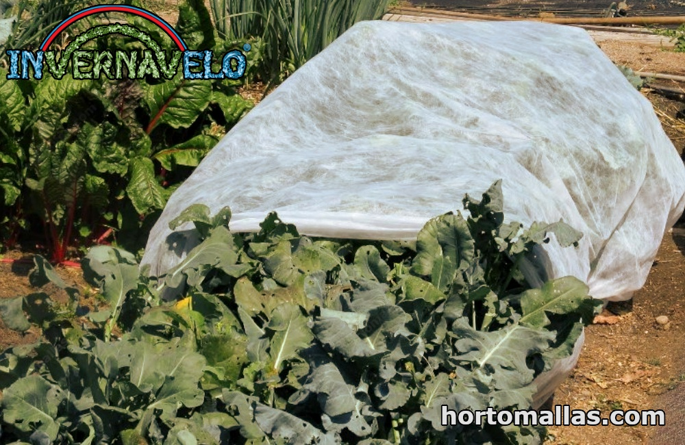 cultivo y manta térmica INVERNAVELO® se puede instalar como cubierta flotante directamente sobre plantas