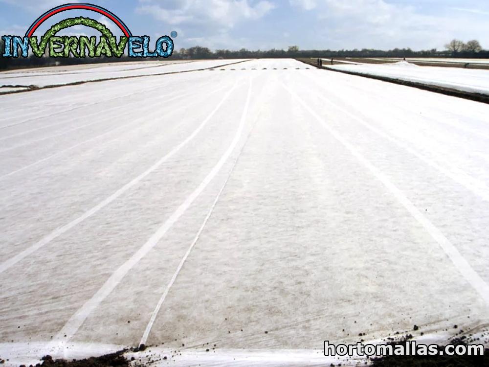 manta térmica instalada sobre cultivos