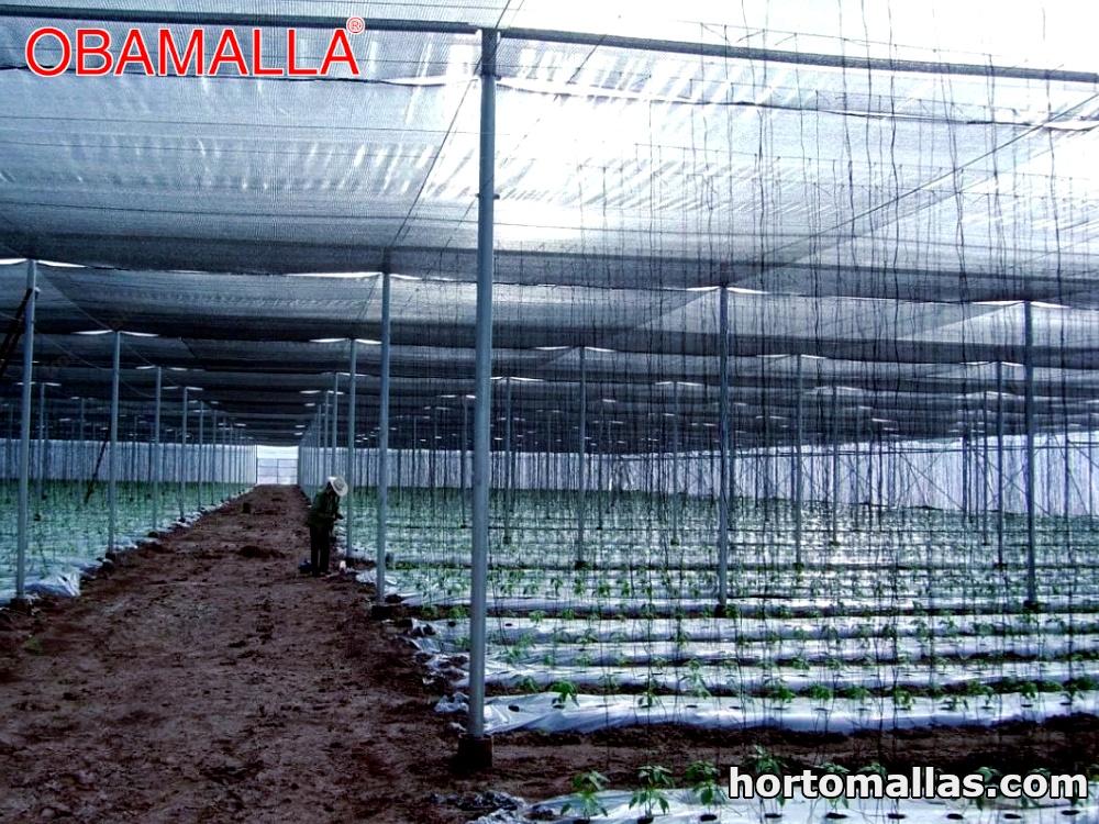 cultivos protegidos con malla de sombreamiento