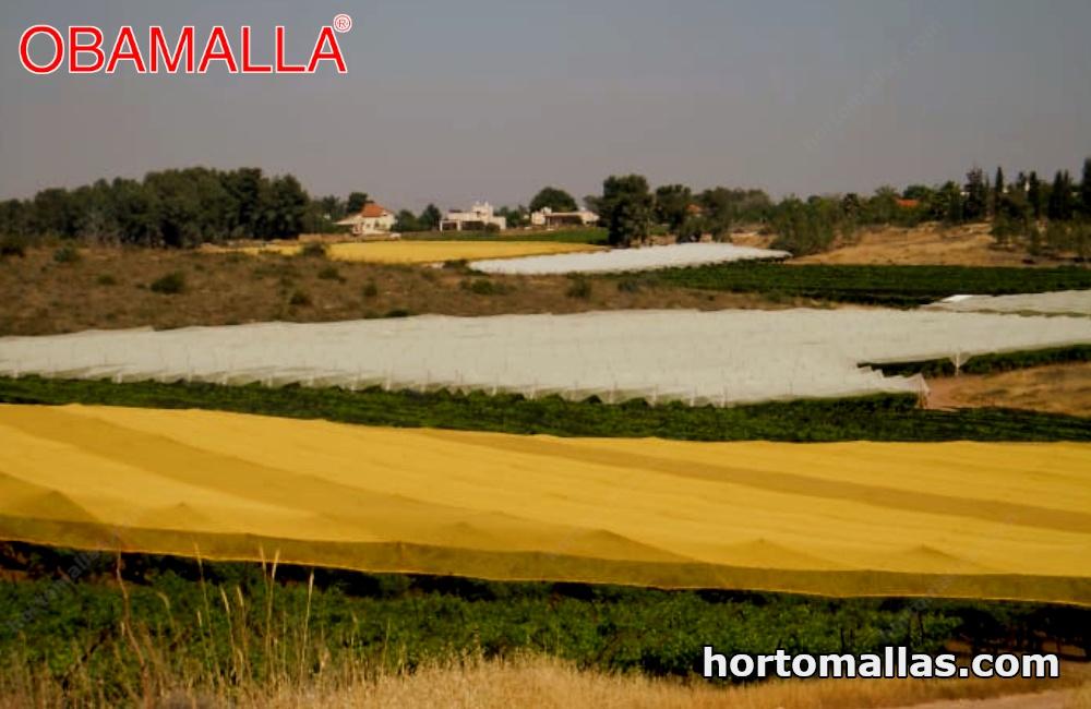 malla sombra amarilla instalada sombre cultivos