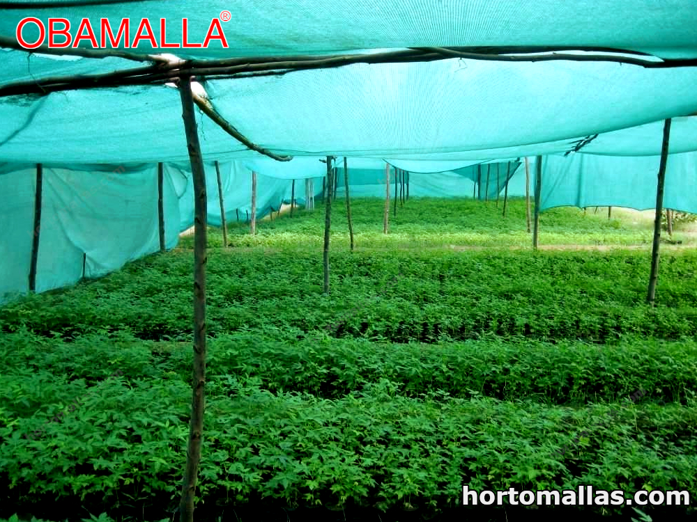 cultivos utilizando malla de sombreo