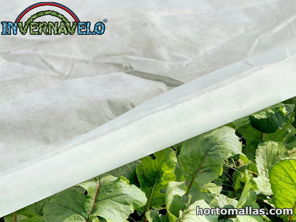 INVERNAVELO® non-woven fabric provides good protection for plants during frost.