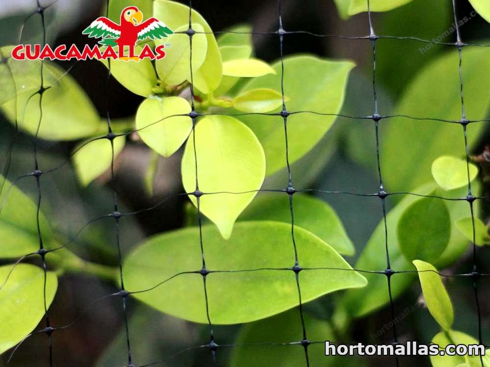 The GUACAMALLAS® bird control netting protects trees, preventing birds from invading and destroying their fruit.