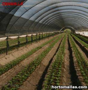 malla de sombreo OBAMALLA usada sobre cultivos