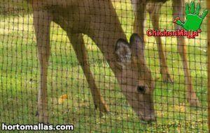 chickenmalla usada contra el ataque de ciervos