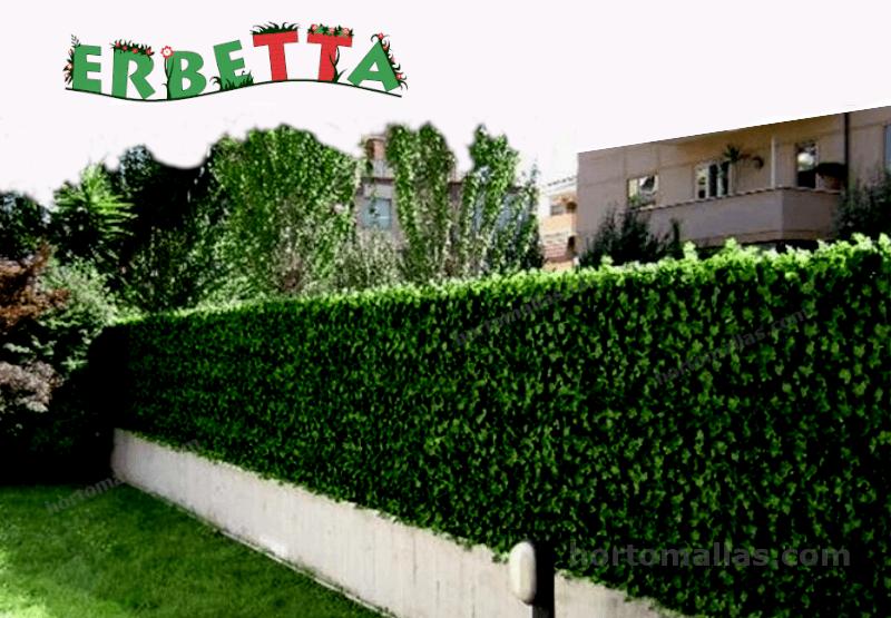muros verdes ERBETTA