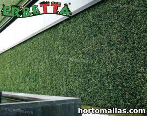 muro verde con erbetta