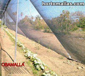 malla sombra usada en invernadero