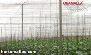 cultivos entutorados protegidos con malla de sombreamiento