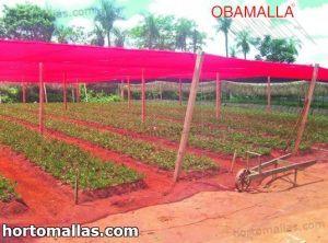 malla sombra rosa colocada sobre cultivos