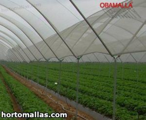 malla sombra obamalla instalada para proteger cultivos