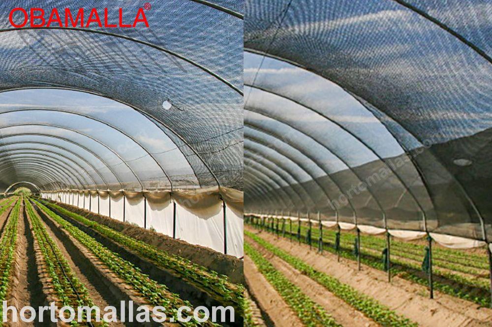 túnel de mallas sombra sobre cultivos