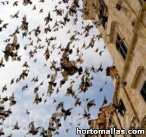 parvada de aves surcando el cielo