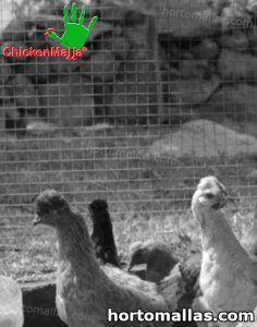malla gallinera para proteger polluelos