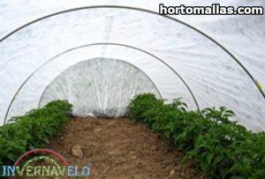 plantas protegidas dentro de túnel hecho con  tela INVERNAVELO