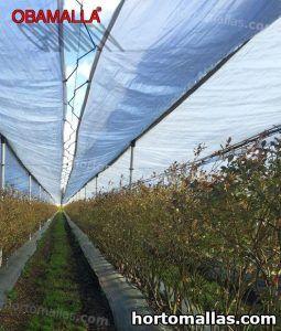 cultivos protegidos con malla de sombreo