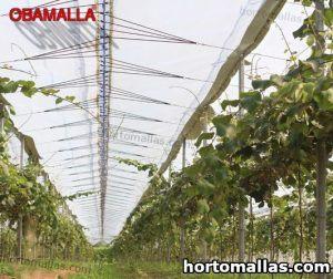 campo de cultivo de berries utilizando malla de sombreo
