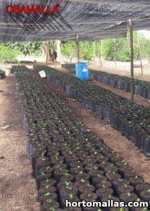malla de sombreamiento obamalla sobre plantas