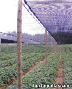 malla de sombreo protegiendo cultivos