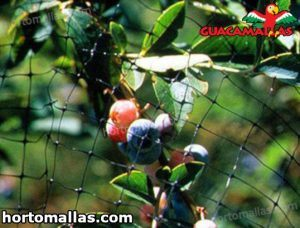 guacamalla mesh protecting fruits