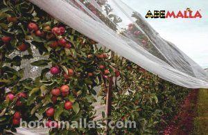 Frutas sin semilla gracias a la malla anti polinización
