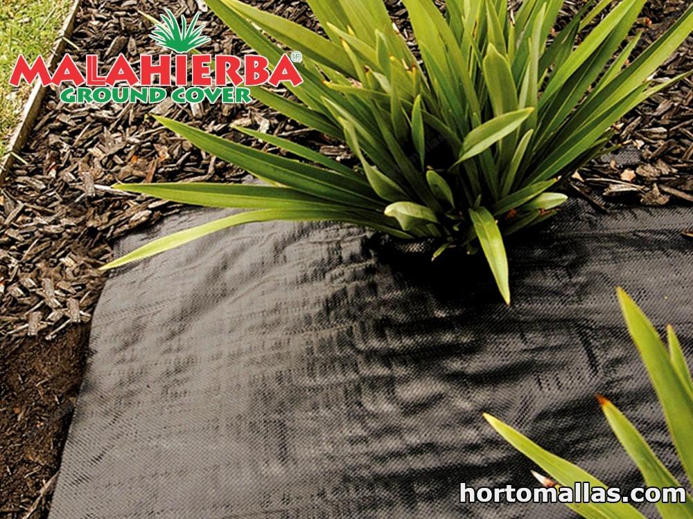 mala hierba ground cover usada en las plantas del jardín.