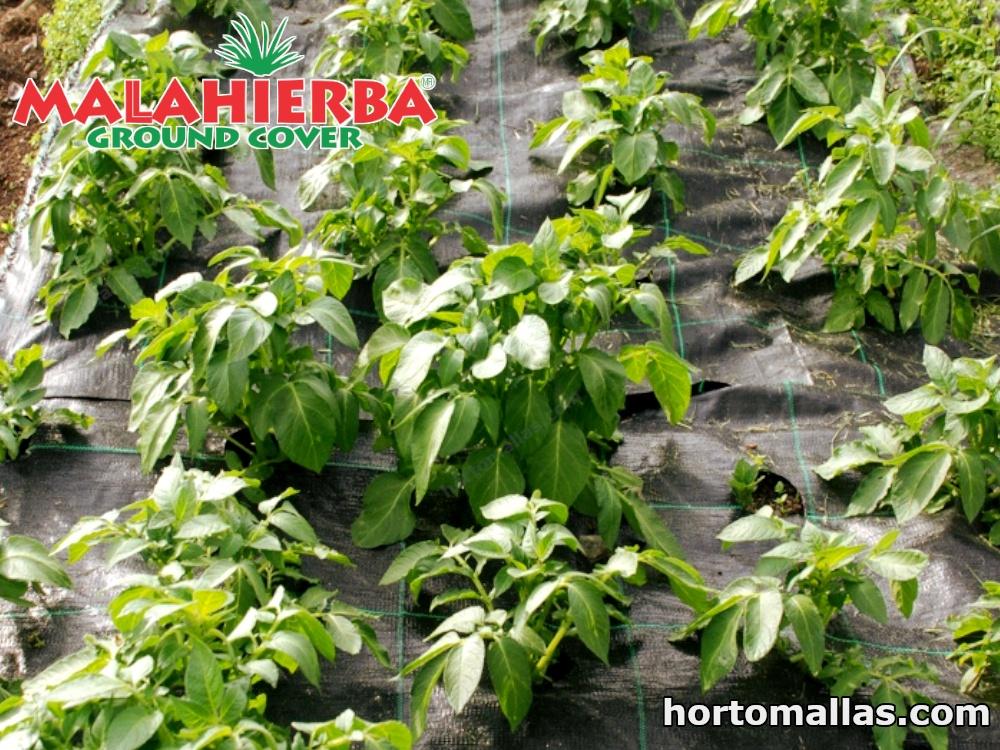 ground cover usada en cultivos.