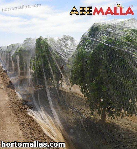 Malha/rede anti polinização para cultivos cítricos