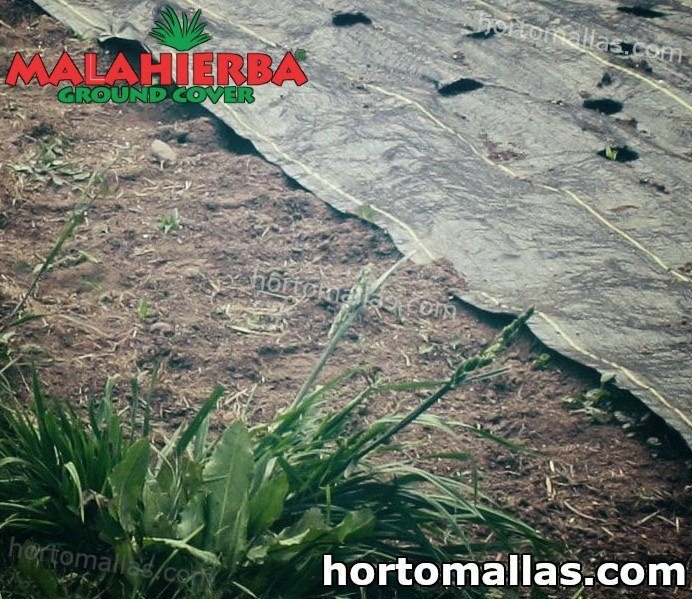 Proteja sus suelos y sus cultivos con la malla anti maleza.