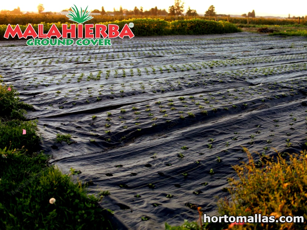 This mesh allows the passage of water and fertilizers for protected plants to achieve good growth.