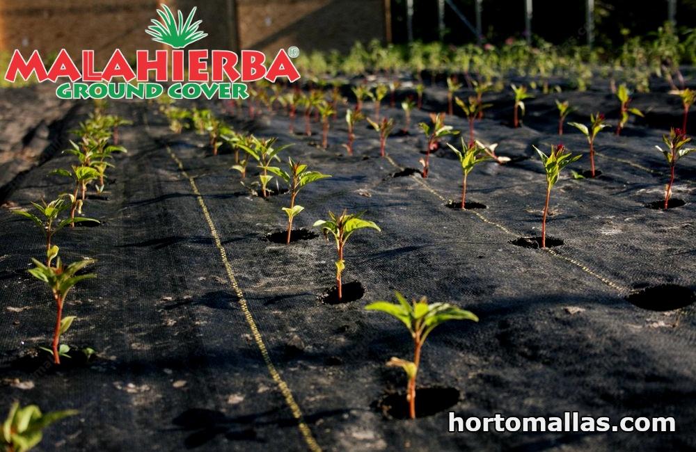 tela malahierba ground cover usada en campo de cultivos