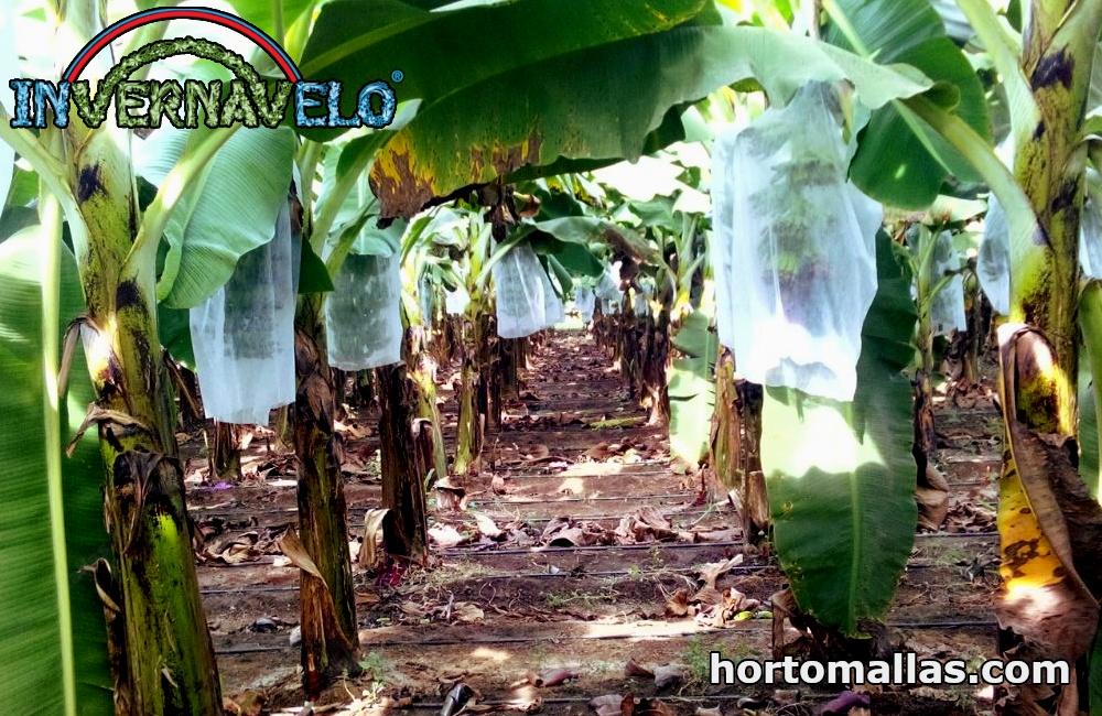 manta para plátanos estabilizado contra los rayos UV