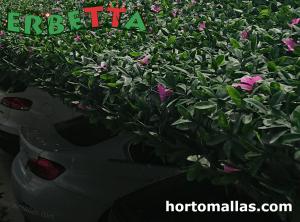 muro verde artificial ERBETTA protegiendo automoviles.