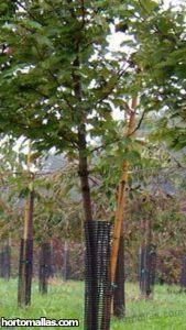 arboles protegidos con malla