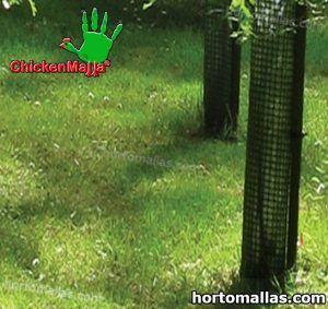 malla chickenmalla instalada para proteger arbolitos