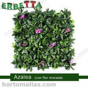 erbetta azalea flor morada muros verdes boscajes