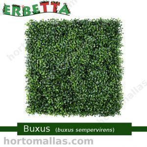 erbetta buxus sempervirens plantas artificiales para exteriores