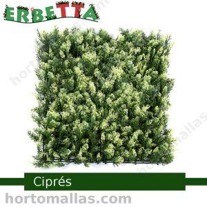 erbetta cipres bardas verdes decorativas