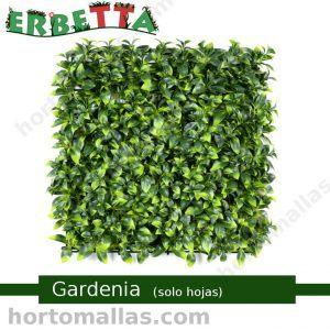 erbetta gardenia solo hojas follaje decorativo