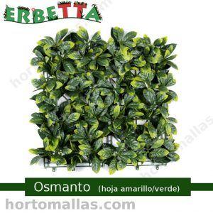 erbetta osmanto hoja amarillo verde techos verdes decorativo