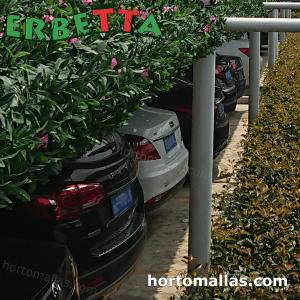 arbustos sinteticos erbetta protegiendo automoviles