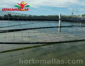 cultivo de peces acuícola con control de aves guacamallas