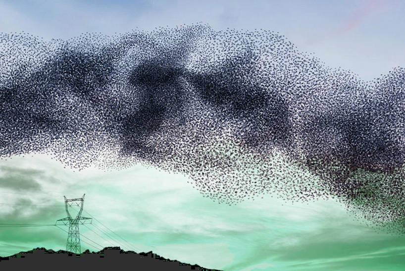 parvada de aves migrando