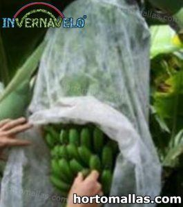 bananas protected with agricultural bag