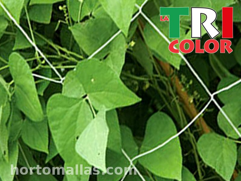 Enticing cucumbers trellis with the TRICOLOR mesh has just become even more economical and efficient!
