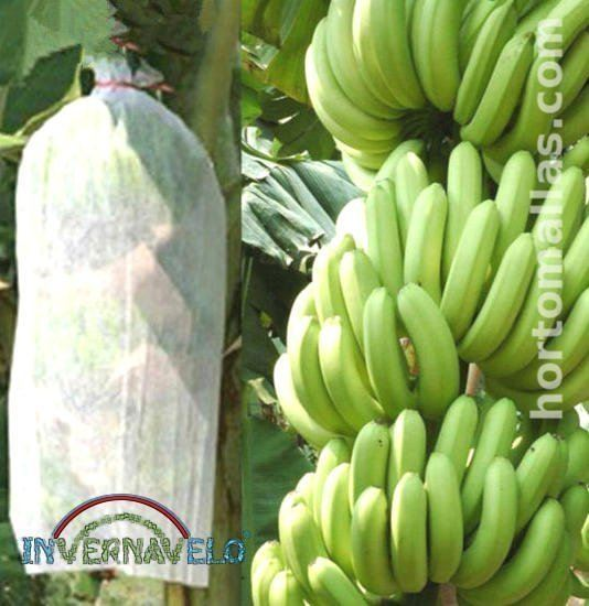 Discover how to improve and protect your banana production